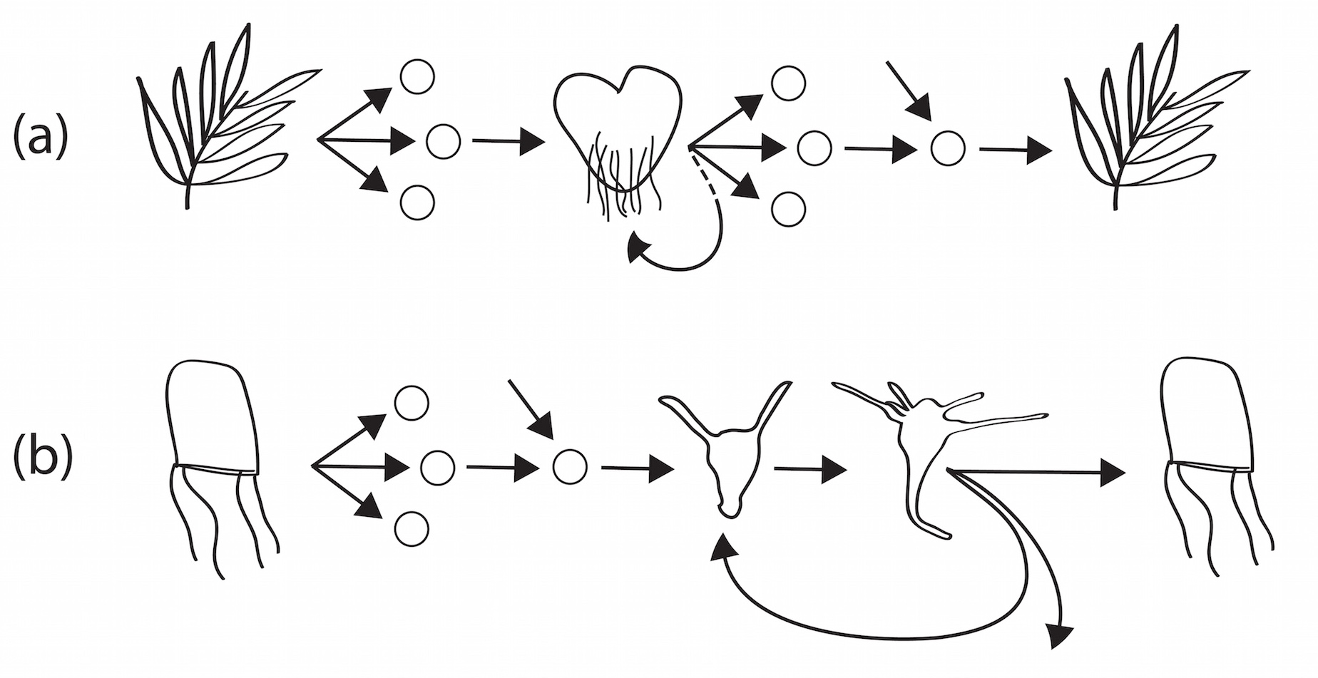 Figure 3 PGS cnids C 3